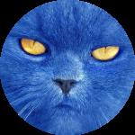 синий кот Барсик