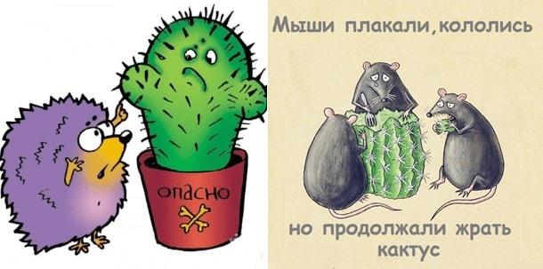 мышки плакали но ели кактус