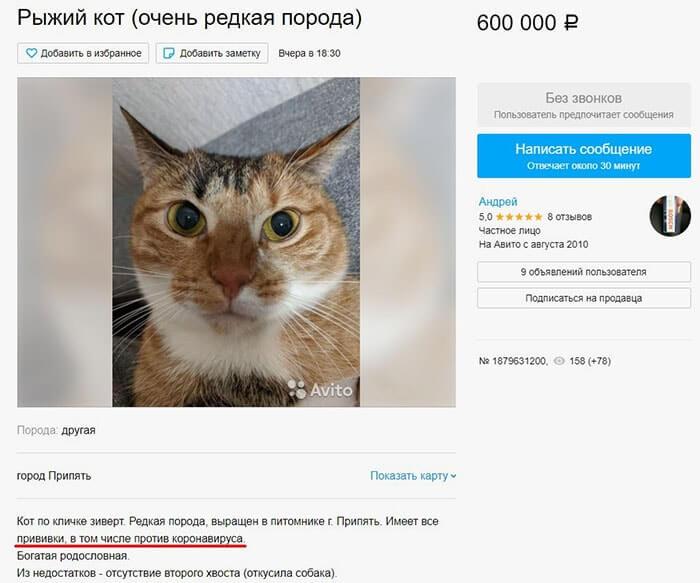 кот зиверт