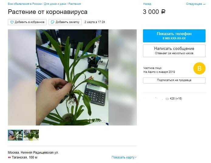 растение от коронавируса